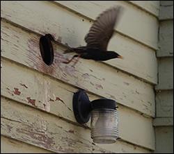 bird removal Thomasville